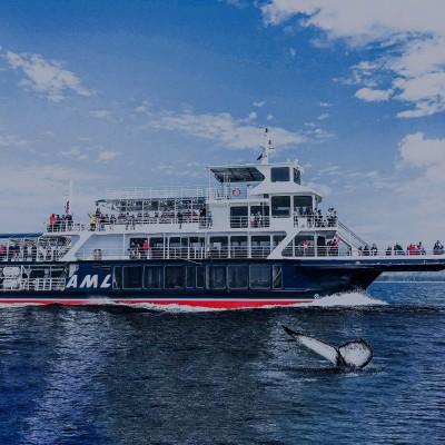 Naviguer avec les baleines de Tadoussac comme officière de navigation